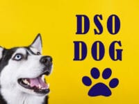 DSO Dog